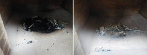 pet cremation in incinerator chamber